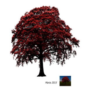 Tree Png For Picsart
